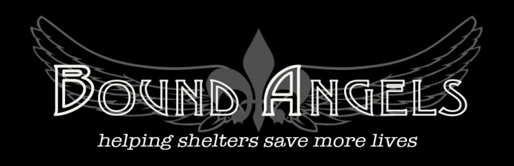 Bound Angels helping shelters save more lives